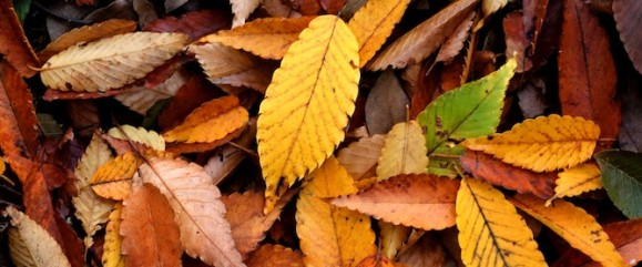 Autumn-leaf-blog-header